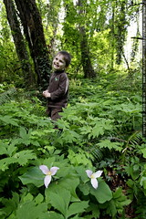 passing through trillium flowers and ferns enroute t…