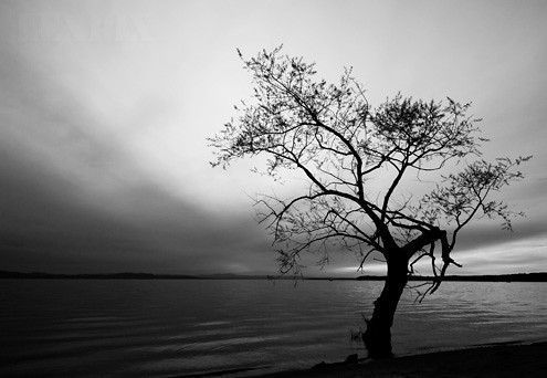 Lonely Black And White Lonely tree in B&W...
