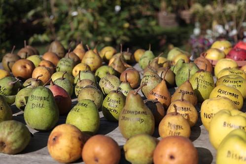 Apple and pear diversity... (la diversité des pommes et des poires)
