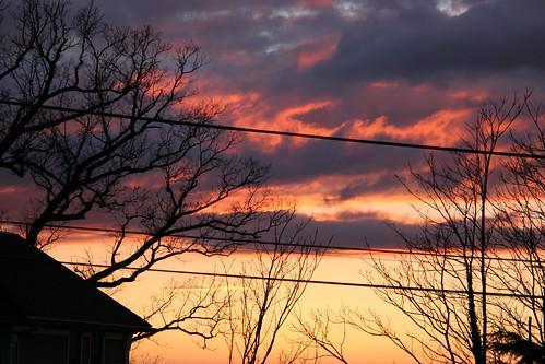 blind blinds light line orange pink power purple shade shades shadow silhouette slats sun sunset tree trees window yellow
