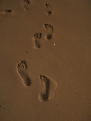 wood(0.0), number(0.0), circle(0.0), shadow(0.0), footprint(1.0), sand(1.0),
