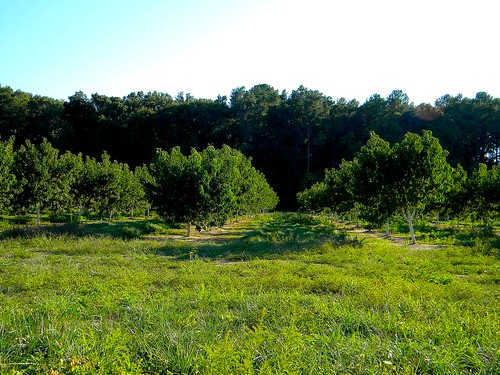 trees tree field fruit farm harvest peach orchard ag delaware agriculture omar sussexcountyde bennettpeachorchard omarde