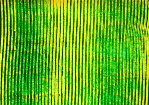 grune-Banane-1-scan