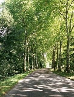 Avenue of trees - Cycle Tour 2007 - France