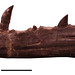 Tawa lower jaw