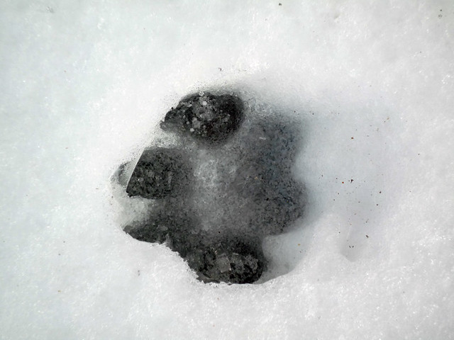 La neige est un bon r v lateur de pipi caca de chien sur for Pipi de chien sur carrelage