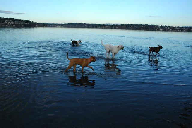 Magnuson Dog Park Algae