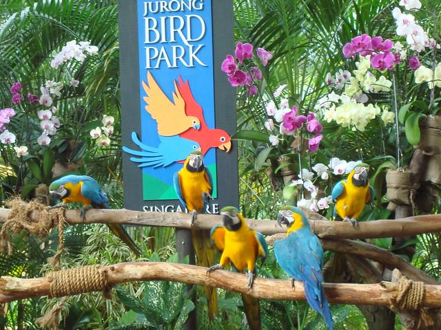 ♫ Jurong♫ Bird Park♫(Singapore )