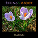 On Foot, Spring In Step, See Spring's Afoot - IMRAN™ — 800+ Views! 150+ Comments!
