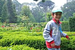 agriculture, shrub, farm, flower, field, garden, meadow, rural area, plantation,