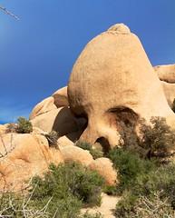 Skull Rockin ~ Joshua Tree