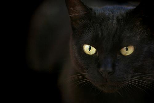 Dark as the night...