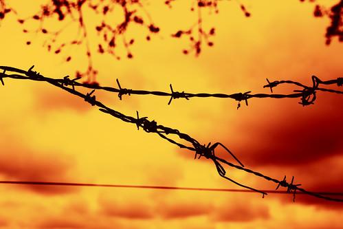 orange skåne wire experimental sweden sverige f80 barbed 2010 fav10 hörby canoneos5dmarkii ¹⁄₁₀₀₀sec ringsjöstrand