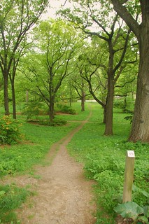 Arnold Arboretum, 18 May 2010: No bikes on the path down from Bussey Hill (damn) (wide)