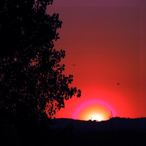 morning sun canada nature sunrise canon soleil spring quebec printemps 2010 matin estrie leverdusoleil quynhvu canonpowershotsx10is laraqueen colorsphotoaward 500x00
