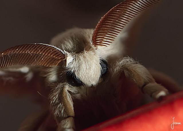 mariposa de sada 1