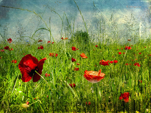 ..in a flowery meadow...