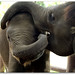 Baby Elephants playing! by Farnooshtango
