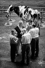 ...hoy la vaca no se vende...