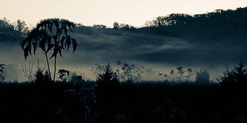 morning autumn ontario canada tree fall monochrome silhouette fog backlight sunrise landscape earlymorning monochromatic niagara backlit stcatharines provincialpark shorthills shorthillsprovincialpark