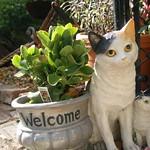The Campos Garden 'Welcome Cat'