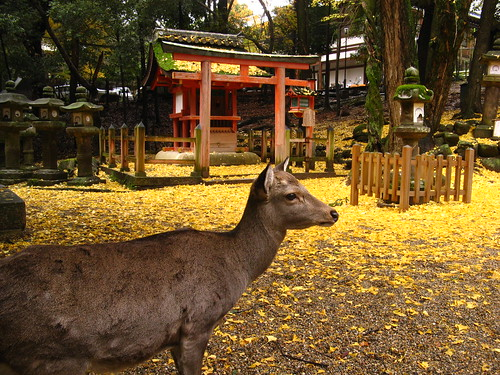 Deer and ginko leaves