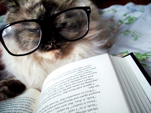 A inteligência felina - Petlove - O Maior Petshop Online do Brasil