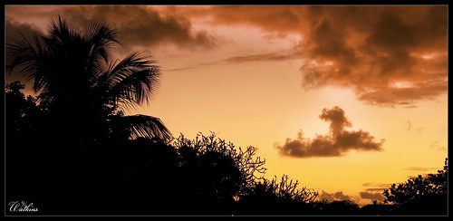 sunset sun tree sunrise coconut palm barbados
