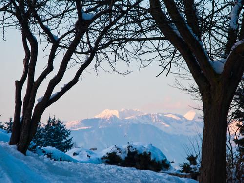 trees winter snow alps slovenia slovenija kamnikalps