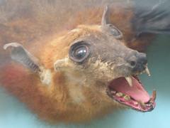 animal(1.0), head(1.0), bat(1.0),