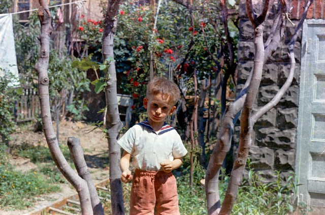 Anthony in 1963 60s Boro Park Brooklyn Fig Trees