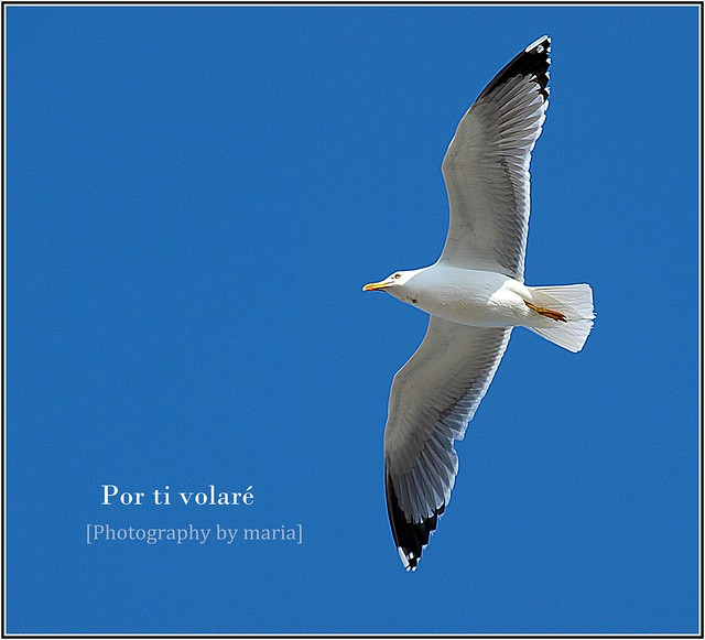 por ti volar flickr photo sharing