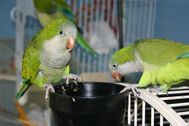 Stanley and Tashy eating together