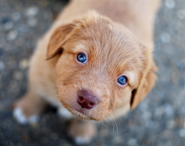 Baby Dogs Blue Eyes