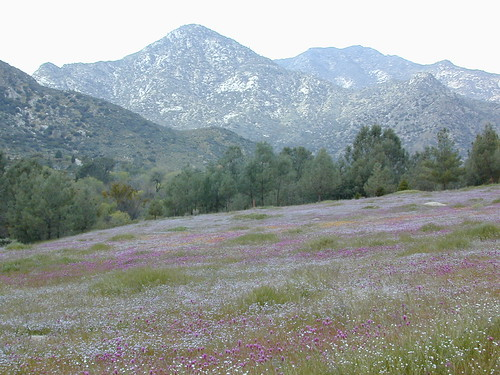 Kern River Wildflowers