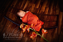Asian influence newborn by Nelms Photographic Artistry