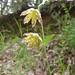 Wildflower Favorites