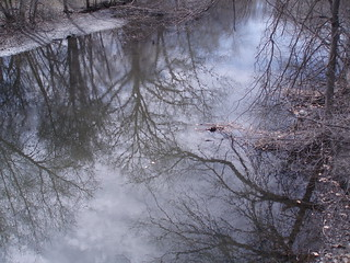 Oily Sheen in the Muddy River, Brookline, Massachusetts