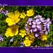 flores by Jorge Delfim - O Meu Olhar