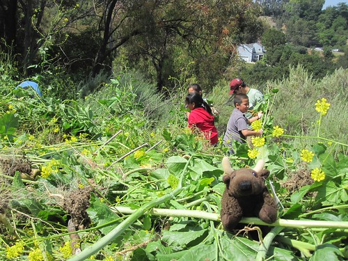 Mustard plant clean up with Foster Elementary Students