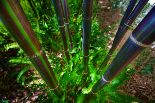 Green Bamboo Perspective