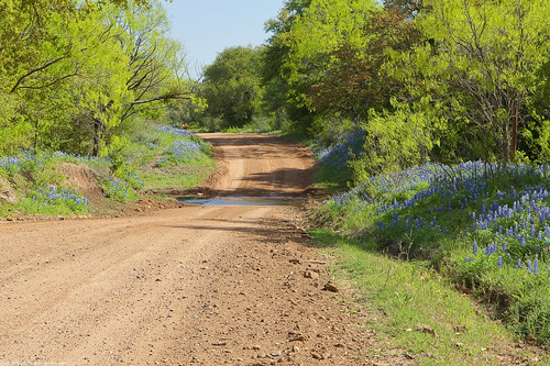ford creek tx dirtroad bluebonnets llanoco