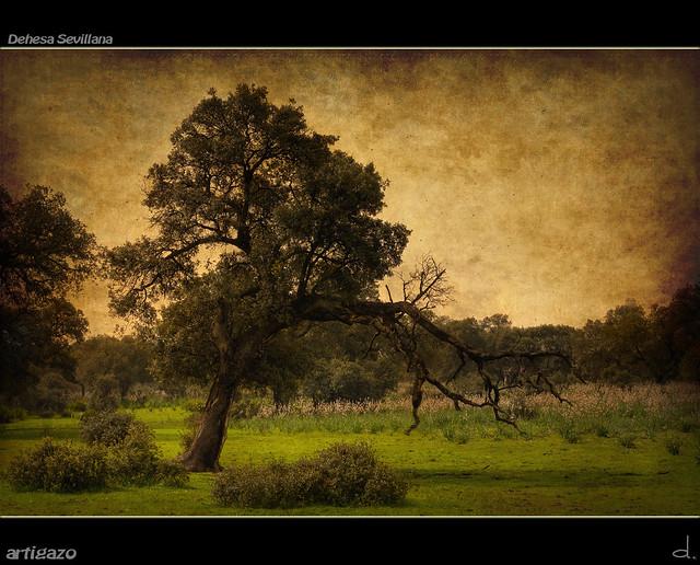 Texturized Sevillian pastureland (I)