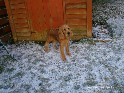 Sun, Apr 4th, 2010 Lost Male Dog - Griffith Ave, Kiltealy, Wexford