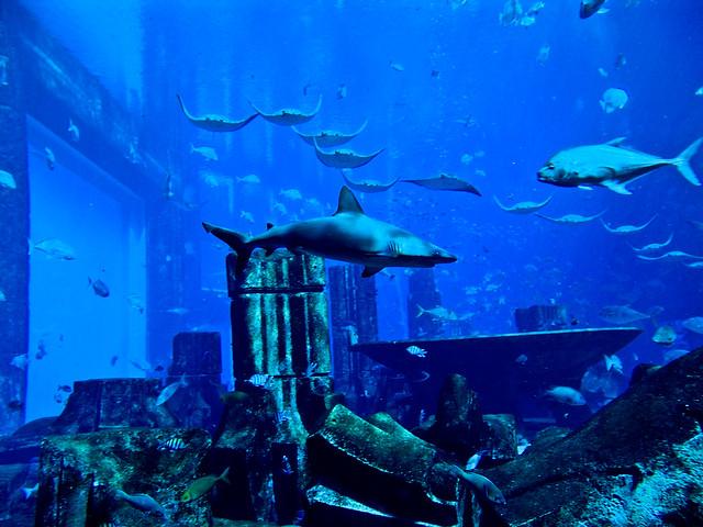 Atlantis Hotel Aquarium Dubal Flickr Photo Sharing