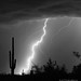 Lightning Strike in Black and White