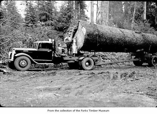 Logtruck carrying a large log with people standing on the truck bed, probably on the Olympic Peninsula
