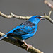 bird image, photo or clip art