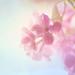 Pretty pinkness by borealnz