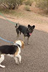 Sirius and Laika